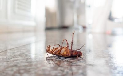 DON'T LET THE FLIES RUIN YOUR SUMMER COMFORT – SERVICE KING