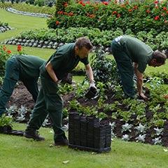 gardeners planting a new garden
