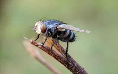 5 Natural Ways to Deal with The Buzzing Flies of Summer