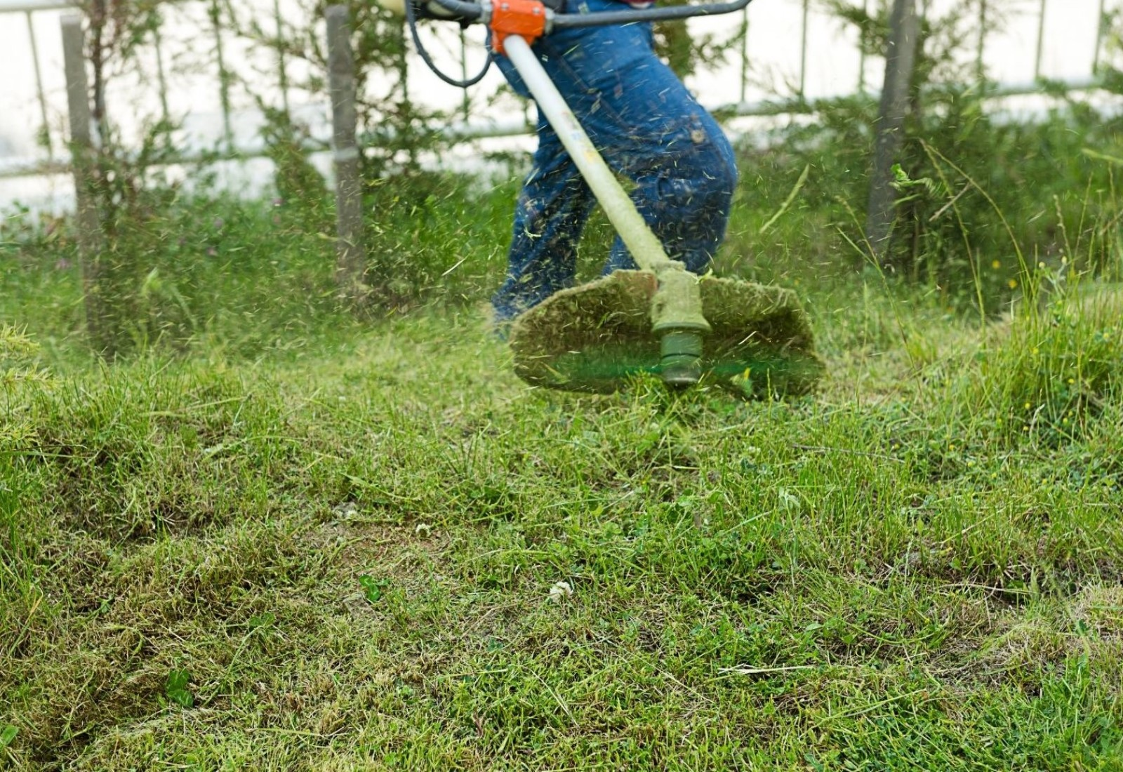 Section Clearing overgrown grass weed eating scrub cutting